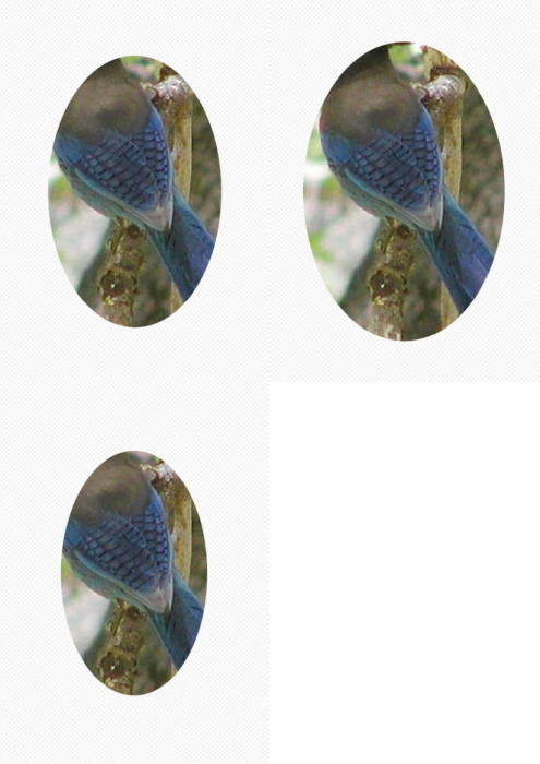 Second Additional product image for - Bird 1. Craft papers for cardmaking and scrapbooking