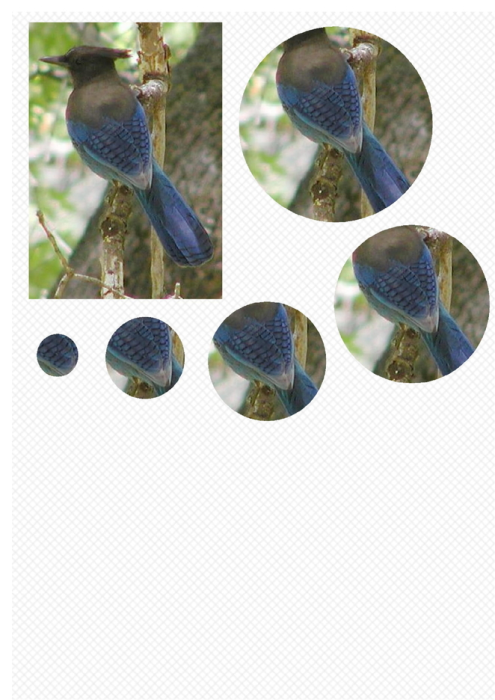 Third Additional product image for - Bird 1. Craft papers for cardmaking and scrapbooking