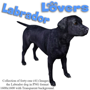 labrador lovers images