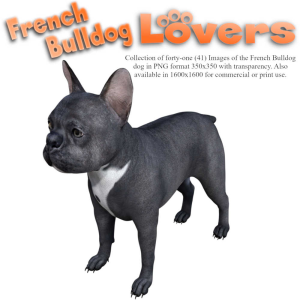 french bulldog lovers images