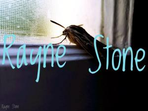 a moth in a window seal