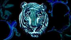 Tiger | Photos and Images | Digital Art