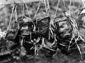 shrunken and smoked heads of slain enemies, borneo, charles hose, 1913