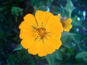 flor natural
