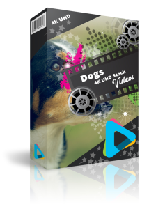 Dog Stock 4K UHD Videos | Movies and Videos | Other