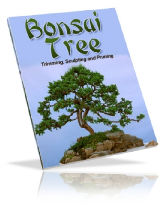 First Additional product image for - bonsai