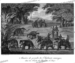 Catching wild elephants in the Kingdom of Ava, Burma, Tardieu L'ai^ne´, 1800 | Photos and Images | Travel
