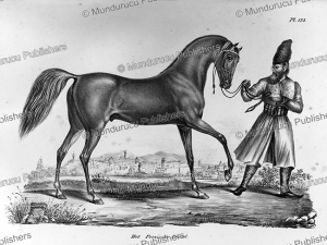 Persian horse and rider, Persia, H.R. Schinz, 1845 | Photos and Images | Travel