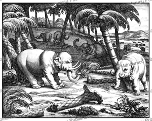 Elephants knocking down trees on Ceylon (Sri Lanka), Philippus Baldaeus, 1672 | Photos and Images | Travel