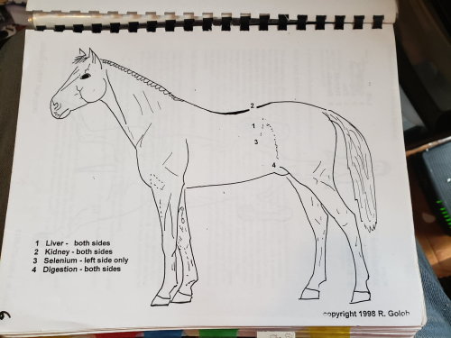 Third Additional product image for - Equine Charts