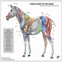 Equine Charts | eBooks | Education