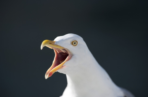 First Additional product image for - seagull