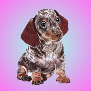 dagwood the dachshund