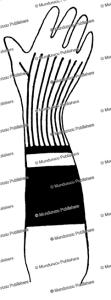 kenyah forearm design for women, borneo, charles hose, 1912