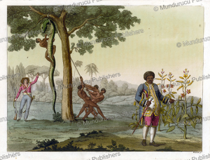 Stedman ordering a slave to skin a Boa Constrictor, C. Bramati, 1816 | Photos and Images | Travel