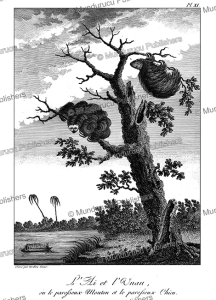 sloths hanging from a tree, surinam, tardieu l'ai^ne´, 1785