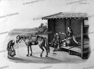 A Japanese work horse, von Siebold, 1825 | Photos and Images | Travel