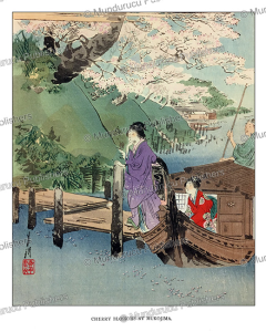 Cherry Blossoms, Japan, Ogata Gekko, 1891 | Photos and Images | Travel