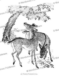 grazing deer, japan, tatibana yasoukuni, 1779