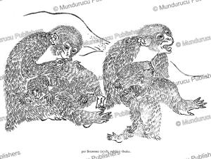 grooming monkeys, japan, shumboku, 1715