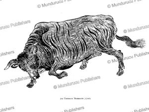 Raging Bull, Japan, Tatibana Morikouni, 1720 | Photos and Images | Travel