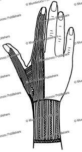 palau female hand tattoo pattern, wilhelm joest, 1887