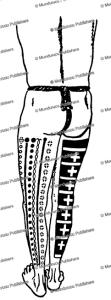 Palau male leg tattoo design, Augustin Kra¨mer, 1910 | Photos and Images | Travel