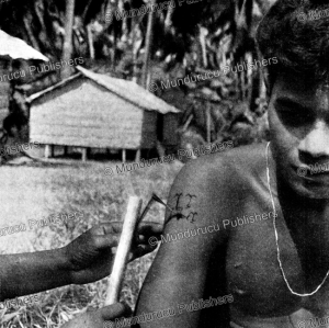 tattooing process on rennell island, solomon islands, t. wolff, 1956