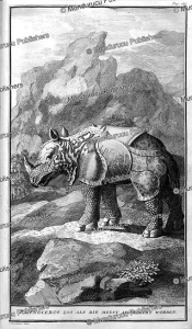 rhinoceros in the land of the hottentots, j. wanderlaar, 1727