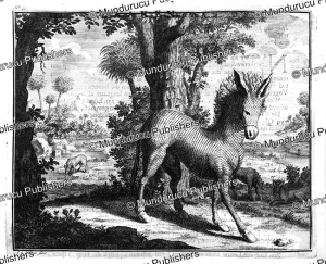 donkey with stripes in the land of the hottentots, constantijn ranst, 1772