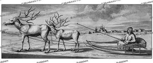 samoyed sledge with deer, cornelis de bruins, 1711