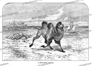 camel on the run, mongolia, josiah wood whymper, 1883