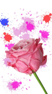 Rose images | Photos and Images | Backgrounds