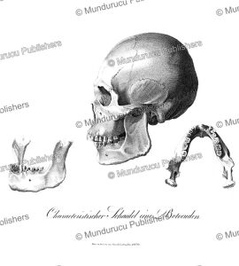 Botocudo skull, Prinz zu Wied-Neuwied, 1821 | Photos and Images | Travel