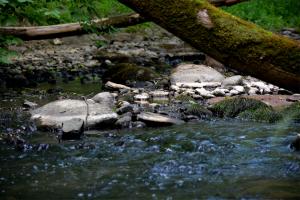 small stream - d_wix_013