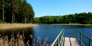 forest lake - d_wix_017.1