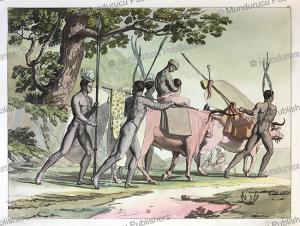 hottentots, k. bonatti, 1818.tif