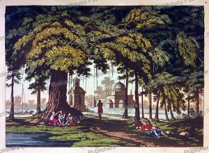 the banyan tree in hindustan or india, gaetano zancon, 1815