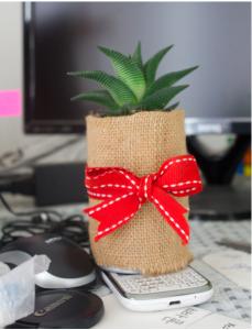 succulent plant image