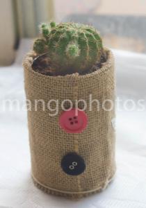 cactus plant gift