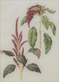 Oswald : Airs for the seasons - Amaranthus : Violin/Flute II | Music | Classical