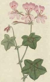 Oswald : Airs for the seasons - Geranium : Violin/Flute II | Music | Classical