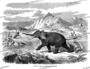 arabs of abyssinia hunting the elephant, the illustrated london news, 1866