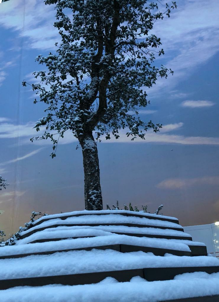 First Additional product image for - Snow Tree