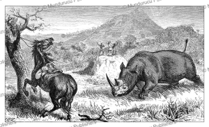 a rhinoceros attacking the horse of samuel white baker, sudan, jean baptiste zwecker, 1866