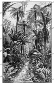 rainforest in victoria, australia, karl denike, 1895