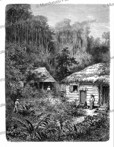 concessions and land clearing on the maroni, french guiana, e´douard riou, 1867