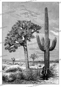 Cactus and yucca in the desert of Arizona, Barclay, 1892   Photos and Images   Digital Art
