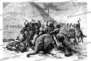 The slaughter of an elephant, French Equatorial Africa, E´douard Riou, 1887 | Photos and Images | Digital Art