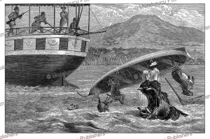 hippopotamus attacks the dingy of samuel bakers boat drowning all the sheep, uganda, johann baptise zwecker, 1874